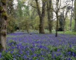 Oxford Botanic Garden & Aboretum